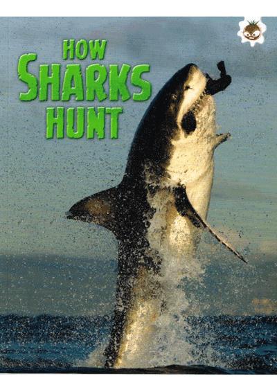 Sharks - How Sharks Hunt Cover